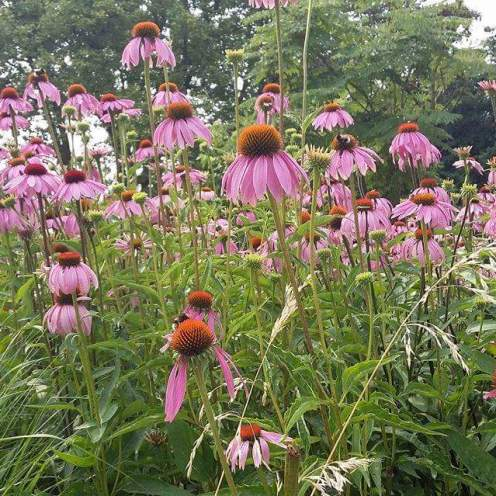 Gruga Park in Essen flowers, summertime