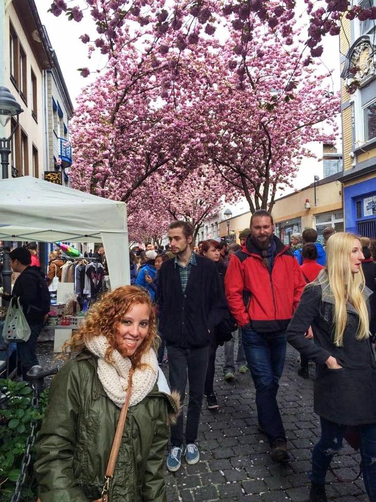 Bonn Cherry Blossom festival